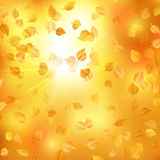 Autumn background with alder leaves. Vector illustration. EPS 10 Royalty Free Stock Photography