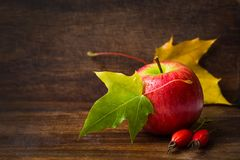 Autumn background with apple, colored maple leaves, rose royalty free stock photography
