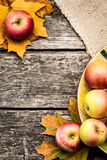 Autumn background with apples Stock Images