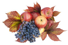 Autumn background from apples and grapes Stock Image