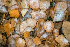 The autumn background Stock Images