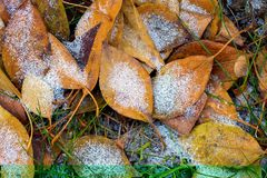 The autumn background Royalty Free Stock Photography