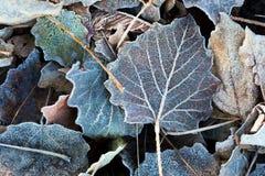 The autumn background Stock Image