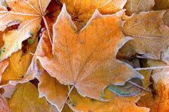 The autumn background Stock Photo