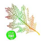 Autumn background. Autumn leaves illustration. autumn heart. Nature stock illustration