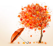 Autumn background with autumn leaves and red umbrella. Stock Photos