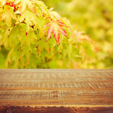 Autumn background with autumn leaves and wooden table Stock Photography