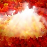 Autumn Background av nedgånglönnlöv Royaltyfria Bilder