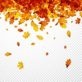 Autumn Background avec les feuilles oranges illustration de vecteur