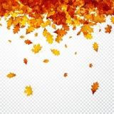Autumn Background avec les feuilles oranges Image libre de droits