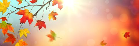 Falling Leaves In Autumn stock images