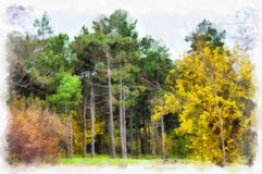 Autumn background beautiful colorful forest landscape nature park with trees in watercolor artistic style pattern. Royalty Free Stock Image