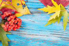Autumn background with berries Royalty Free Stock Photos