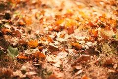 Autumn Background-Beschaffenheit des Gelbs verlässt mit Sonnenlicht, Herbst Stockfotografie