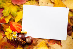 Autumn, background, blank, card, copy, decoration, Stock Images