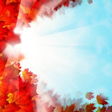 Autumn Background Border. Red Leaves and Sky Stock Photos