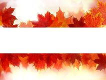 Autumn background border with white copy space royalty free stock photography