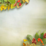 Autumn background. And a bouquet of autumn leaves on wooden background. School background Stock Photos