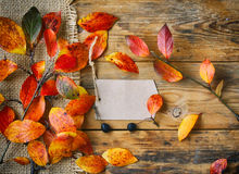 Autumn background branch with red yellow leaves. Autumn background branch with red leaves, canvas, cloth, paper tag on an old wooden board table Stock Photos