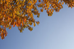 Autumn background Royalty Free Stock Photo