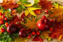 Autumn background in bright colors royalty free stock images