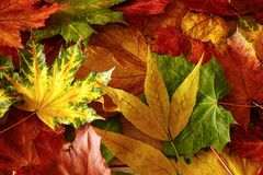 Autumn background in bright colors stock photography