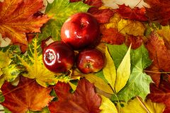 Autumn background in bright colors royalty free stock image