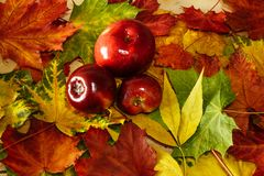 Autumn background in bright colors royalty free stock photography