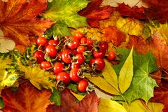Autumn background in bright colors royalty free stock photos