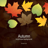 Autumn background with bright leaves Stock Images