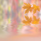 Autumn background 001 Royalty Free Stock Images
