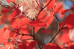 Autumn background from bright red leaves Stock Photography