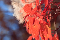 Autumn background from bright red leaves Royalty Free Stock Photos
