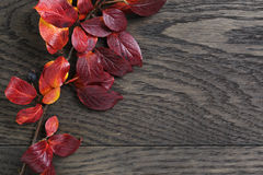 Autumn background with bush leaves on stained oak table Stock Photography