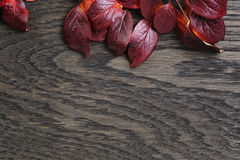 Autumn background with bush leaves on stained oak table Royalty Free Stock Image