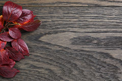 Autumn background with bush leaves on stained oak table Stock Photos