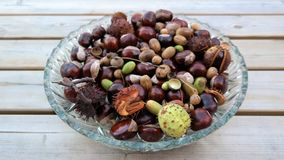 Autumn background with chestnuts and acorns Stock Photo