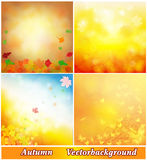 Autumn background collection Royalty Free Stock Images