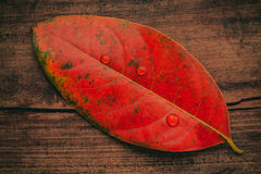 Autumn background with colored  leaves falling on grunge wooden Stock Photography
