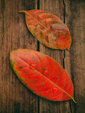 Autumn background with colored  leaves falling on grunge wooden Royalty Free Stock Images
