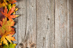 Autumn background with colored leaves Stock Photos