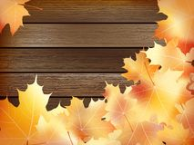 Autumn background with colored leaves. plus EPS10. Autumn background with colored leaves on wooden board. plus EPS10 vector file Stock Photography