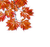 Autumn background with colored leaves, space for text Royalty Free Stock Photos
