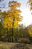 Autumn background with colored leaves of the tree and river in background. Sunny day royalty free stock photo