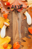 Autumn background with colored leaves royalty free stock images