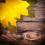 Autumn background with colored leaves Royalty Free Stock Photo