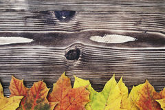 Autumn background with colored leaves on wooden board Royalty Free Stock Image