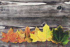 Autumn background with colored leaves on wooden board Stock Photos
