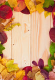 Autumn background with colored leaves on wooden board Stock Images