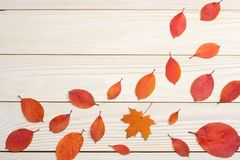 autumn background with colored leaves on wooden board. top view with copy space royalty free stock image